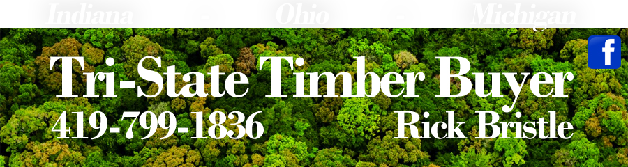 Timber Harvester Auburn Al,